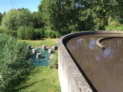 ruches et station d'épuration